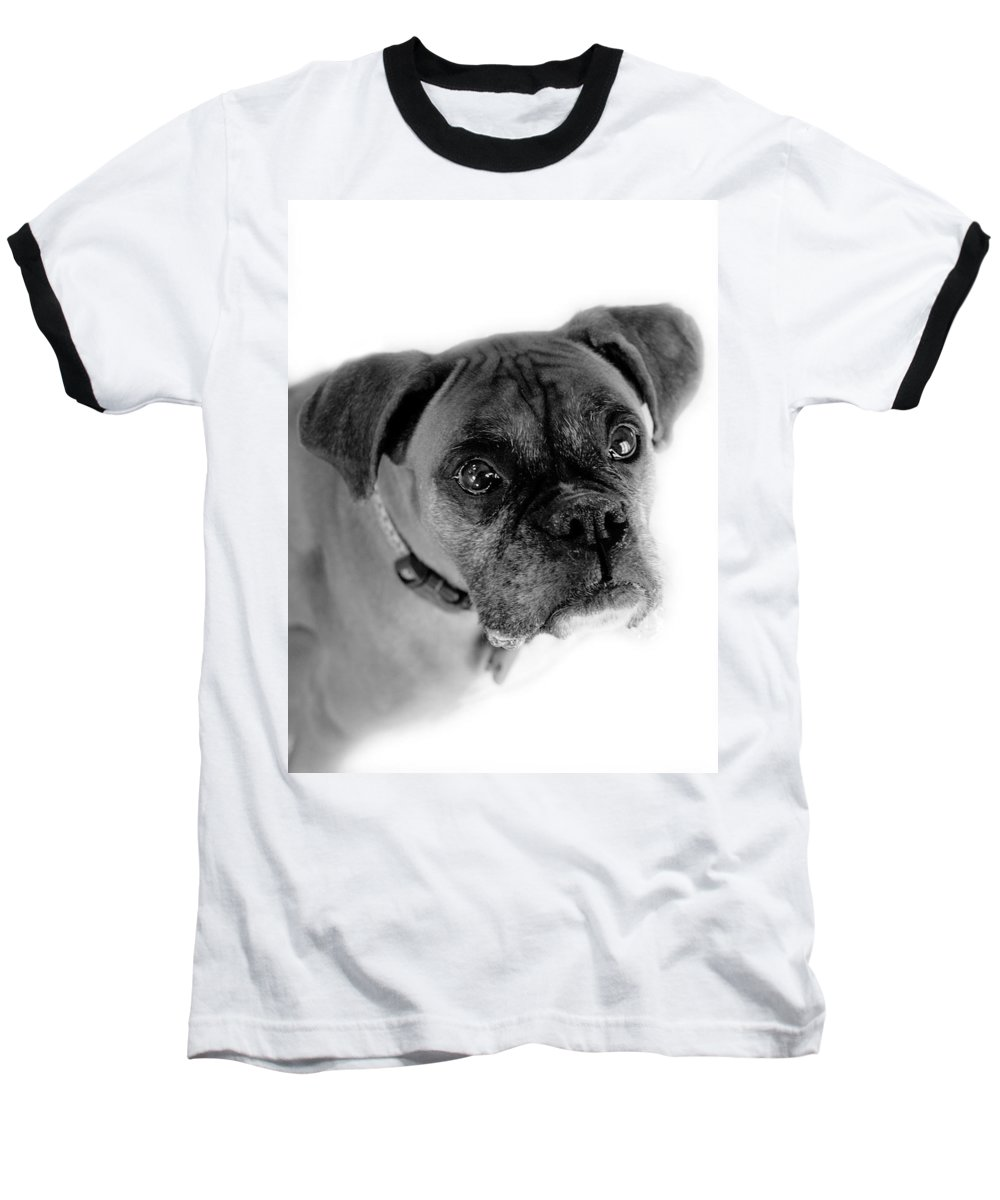 Boxer Baseball T-Shirt featuring the photograph Boxer Dog by Marilyn Hunt
