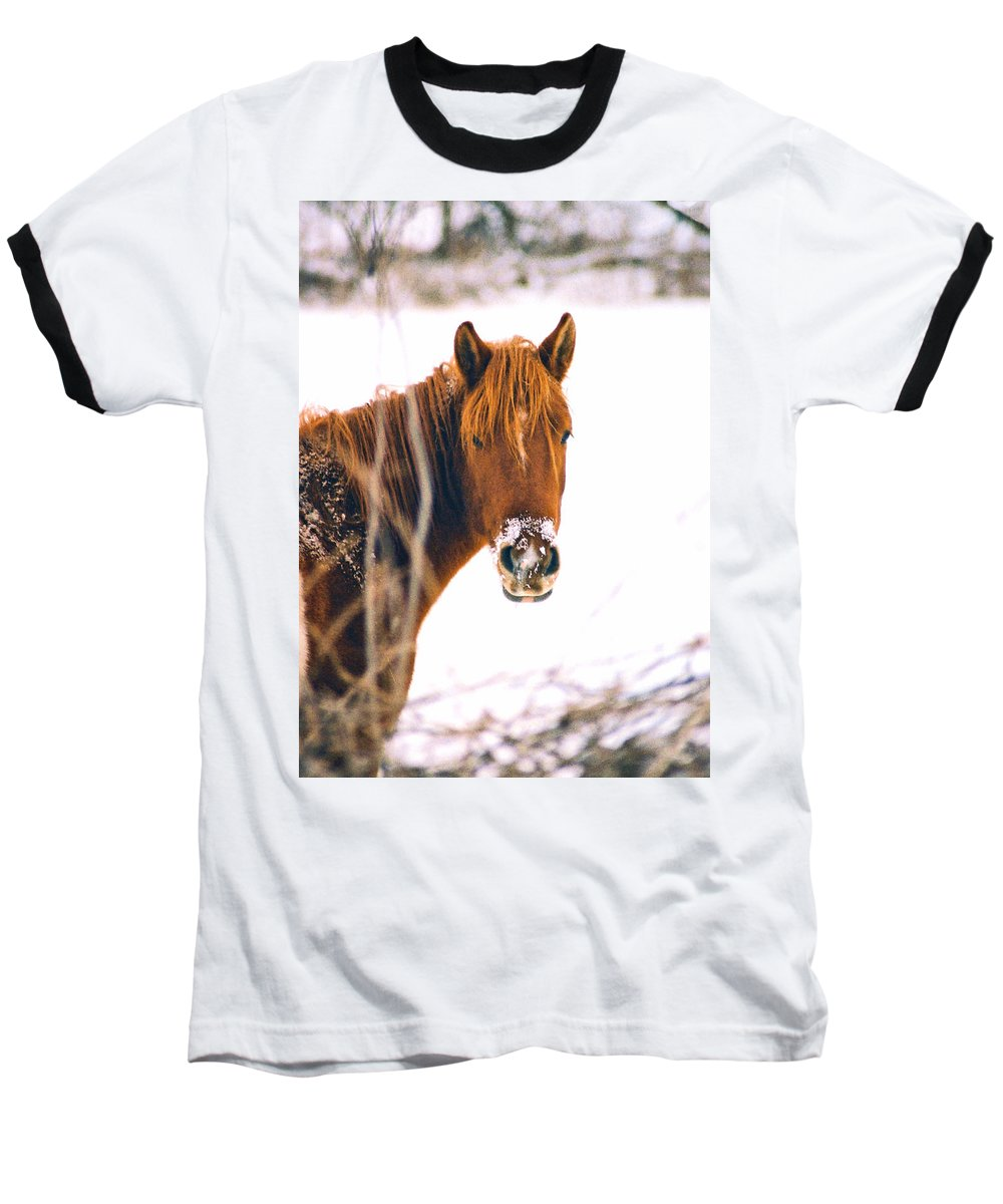 Horse Baseball T-Shirt featuring the photograph Horse In Winter by Steve Karol