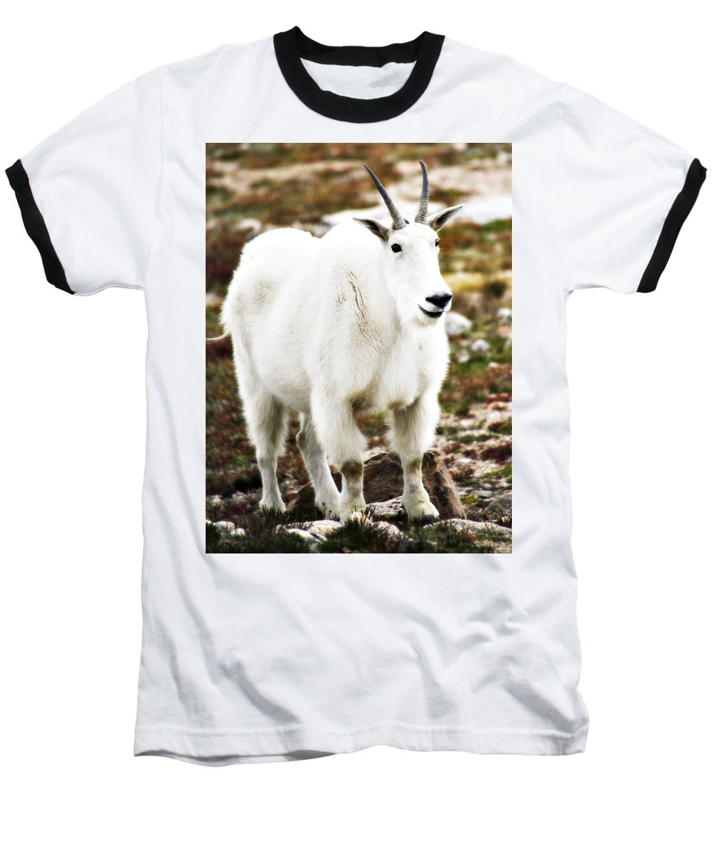 Animal Baseball T-Shirt featuring the photograph Mountain Goat by Marilyn Hunt