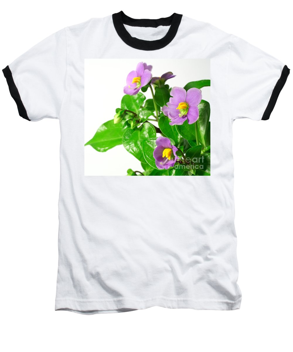 Closeup Baseball T-Shirt featuring the photograph Persian Violets by Gaspar Avila