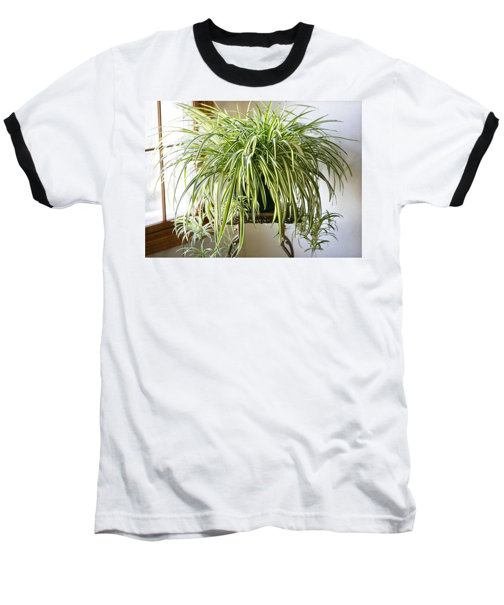 Spider Plant Baseball T-Shirt featuring the photograph Spider Plant by Marilyn Hunt