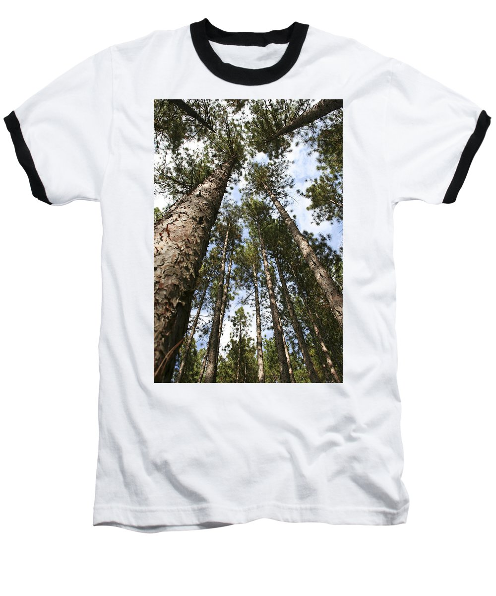 Autumn Baseball T-Shirt featuring the photograph Tree Stand by Margie Wildblood