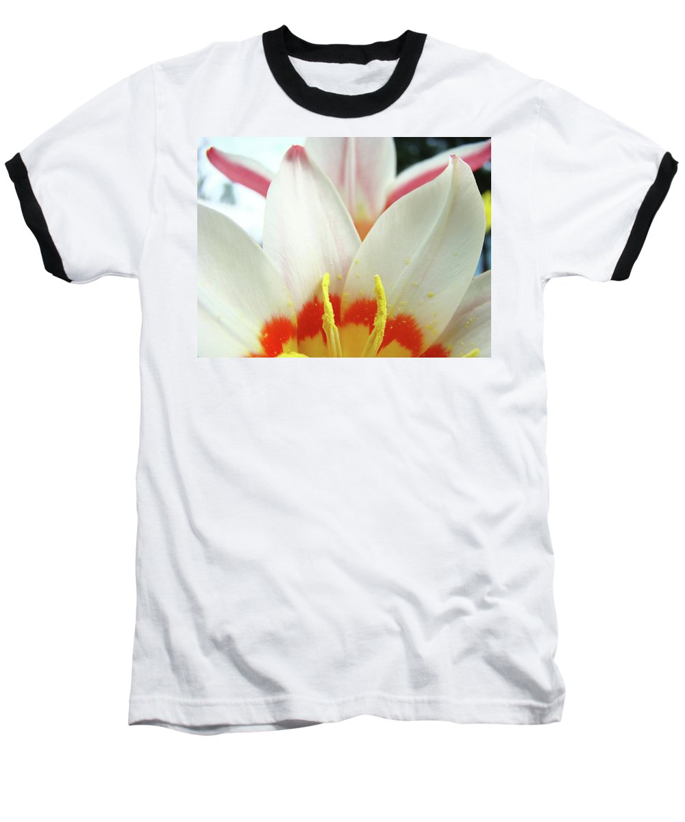 �tulips Artwork� Baseball T-Shirt featuring the photograph Tulip Flowers Art Prints 4 Spring White Tulip Flower Macro Floral Art Nature by Baslee Troutman