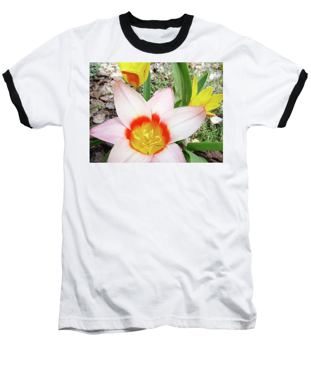 �tulips Artwork� Baseball T-Shirt featuring the photograph Tulips Artwork 9 Spring Floral Pink Tulip Flowers Art Prints by Baslee Troutman