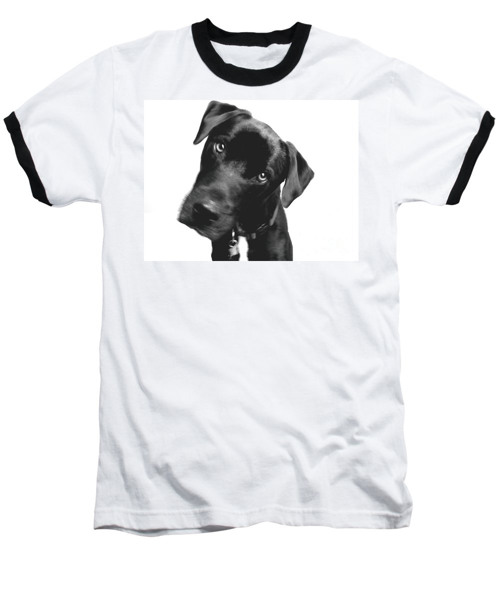 Labrador Baseball T-Shirt featuring the photograph What by Amanda Barcon