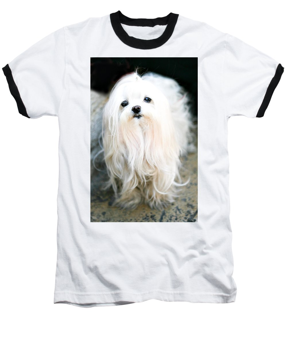 Small Baseball T-Shirt featuring the photograph White Fluff by Marilyn Hunt