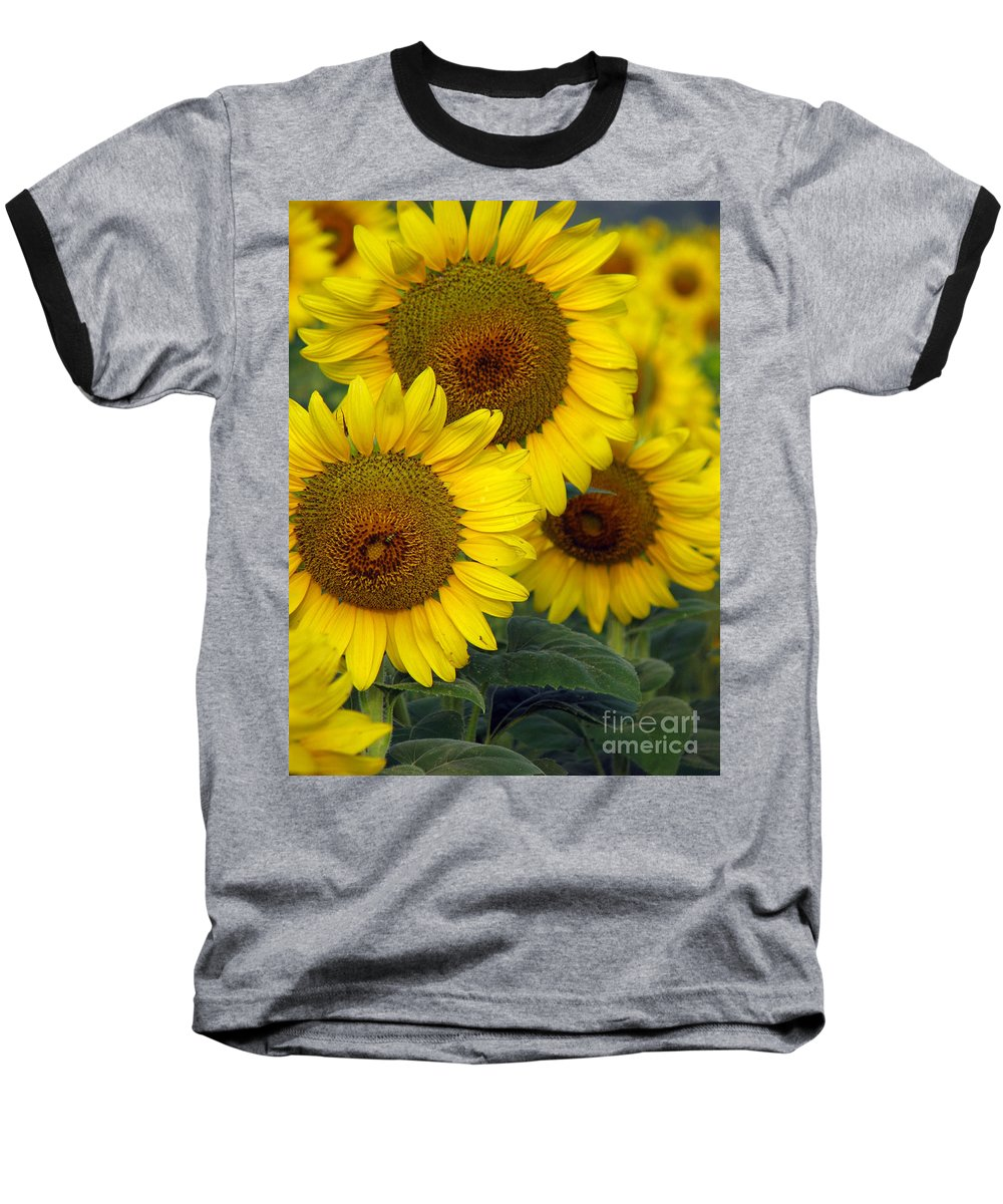 Sunflowers Baseball T-Shirt featuring the photograph Sunflower Series by Amanda Barcon