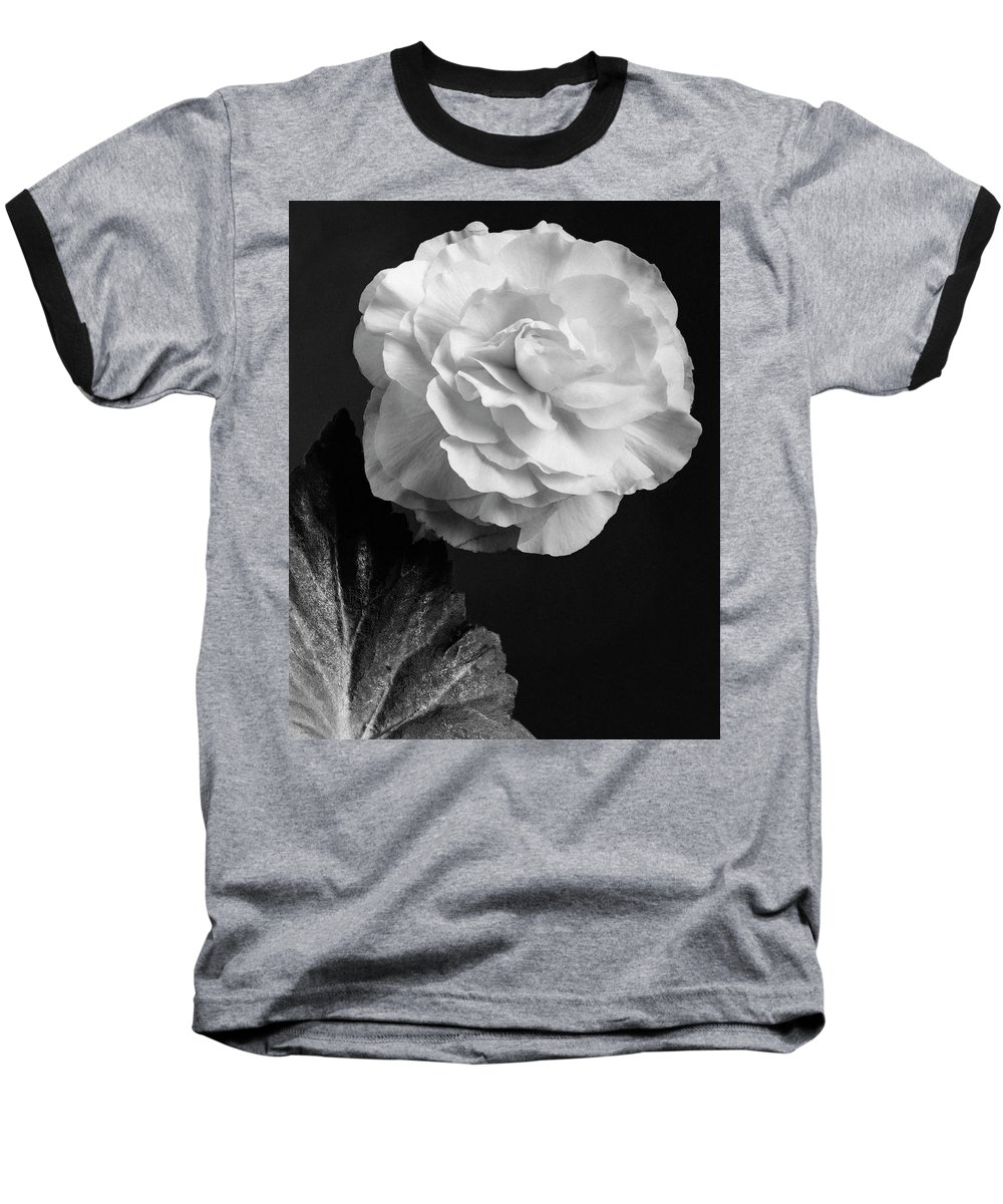 Flowers Baseball T-Shirt featuring the photograph A Camellia Flower by J. Horace McFarland