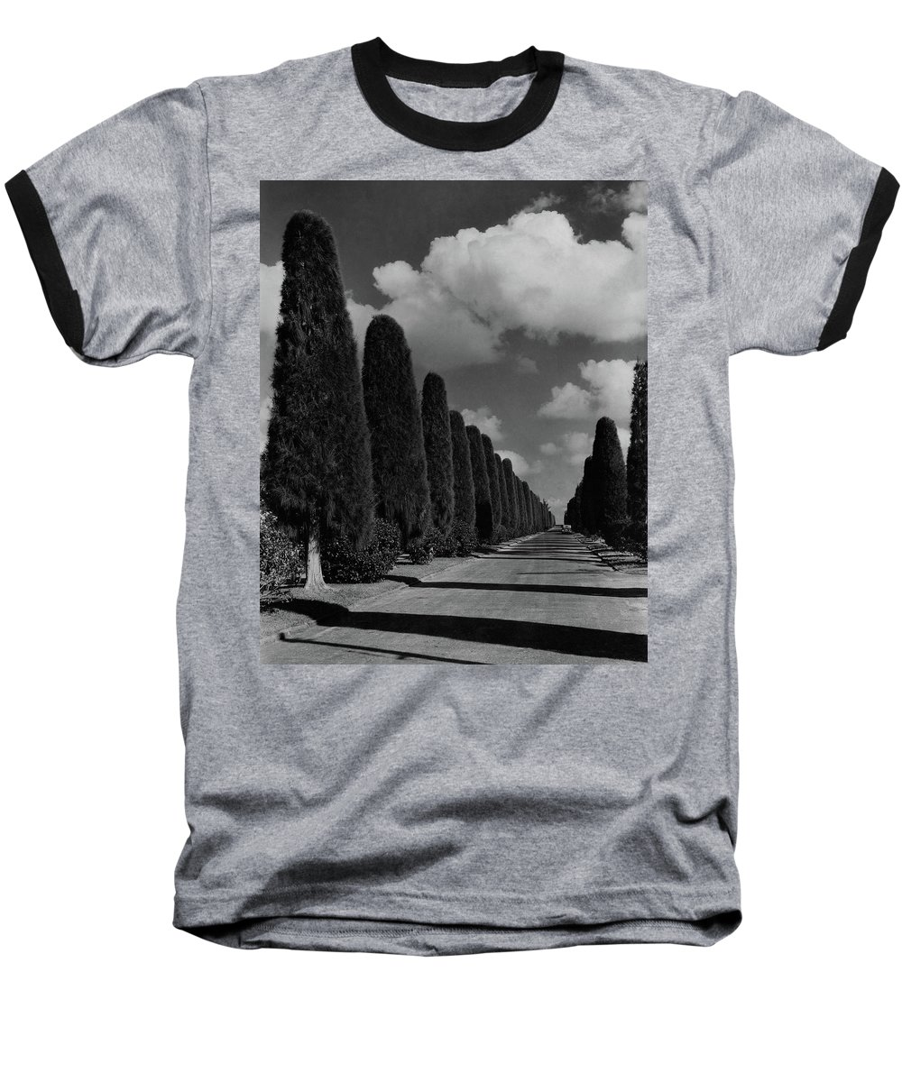 Cityscape Baseball T-Shirt featuring the photograph A Street Lined With Cypress Trees by John Kabel