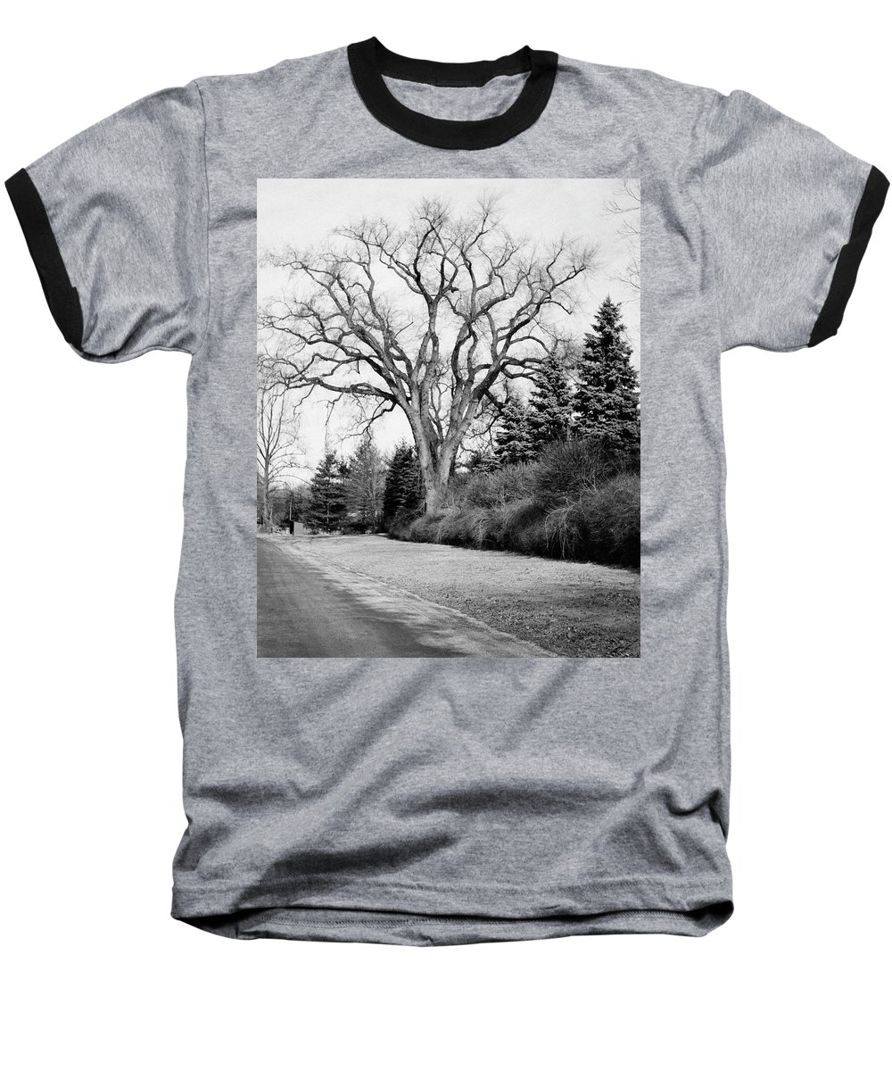 Exterior Baseball T-Shirt featuring the photograph An Elm Tree At The Side Of A Road by Tom Leonard