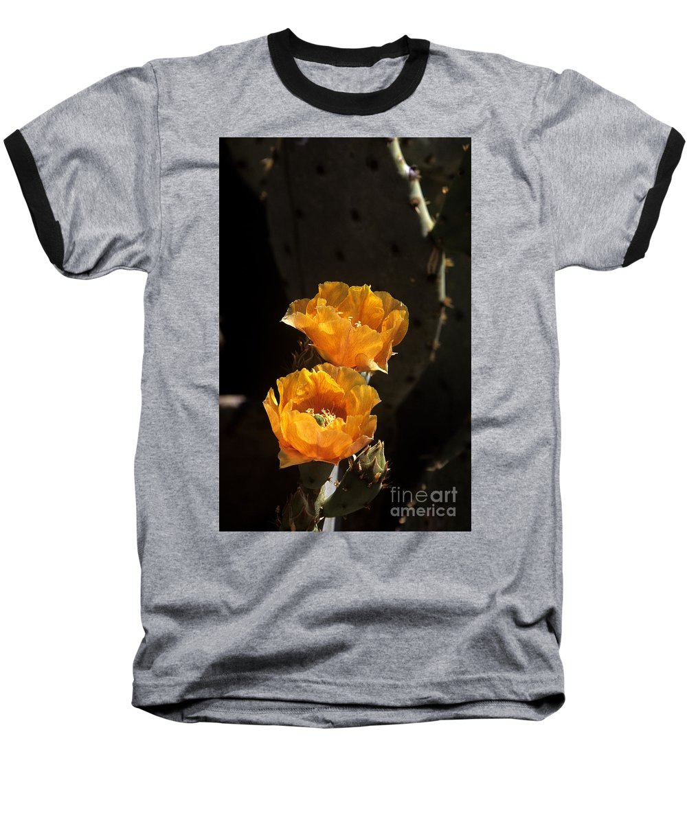 Cactus Baseball T-Shirt featuring the photograph Apricot Blossoms by Kathy McClure