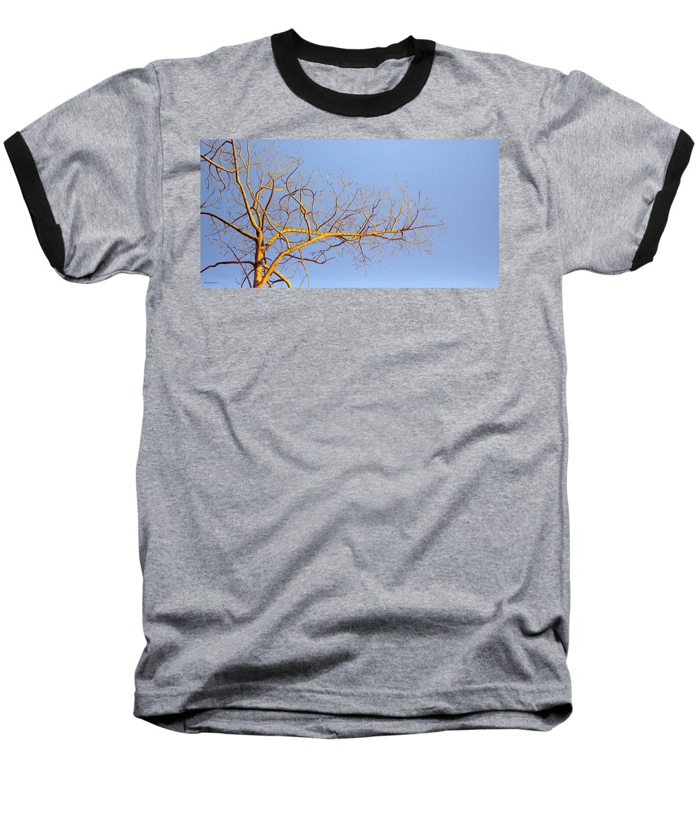 Aspen Painting Baseball T-Shirt featuring the painting Aspen In The Autumn Sun by Elaine Booth-Kallweit