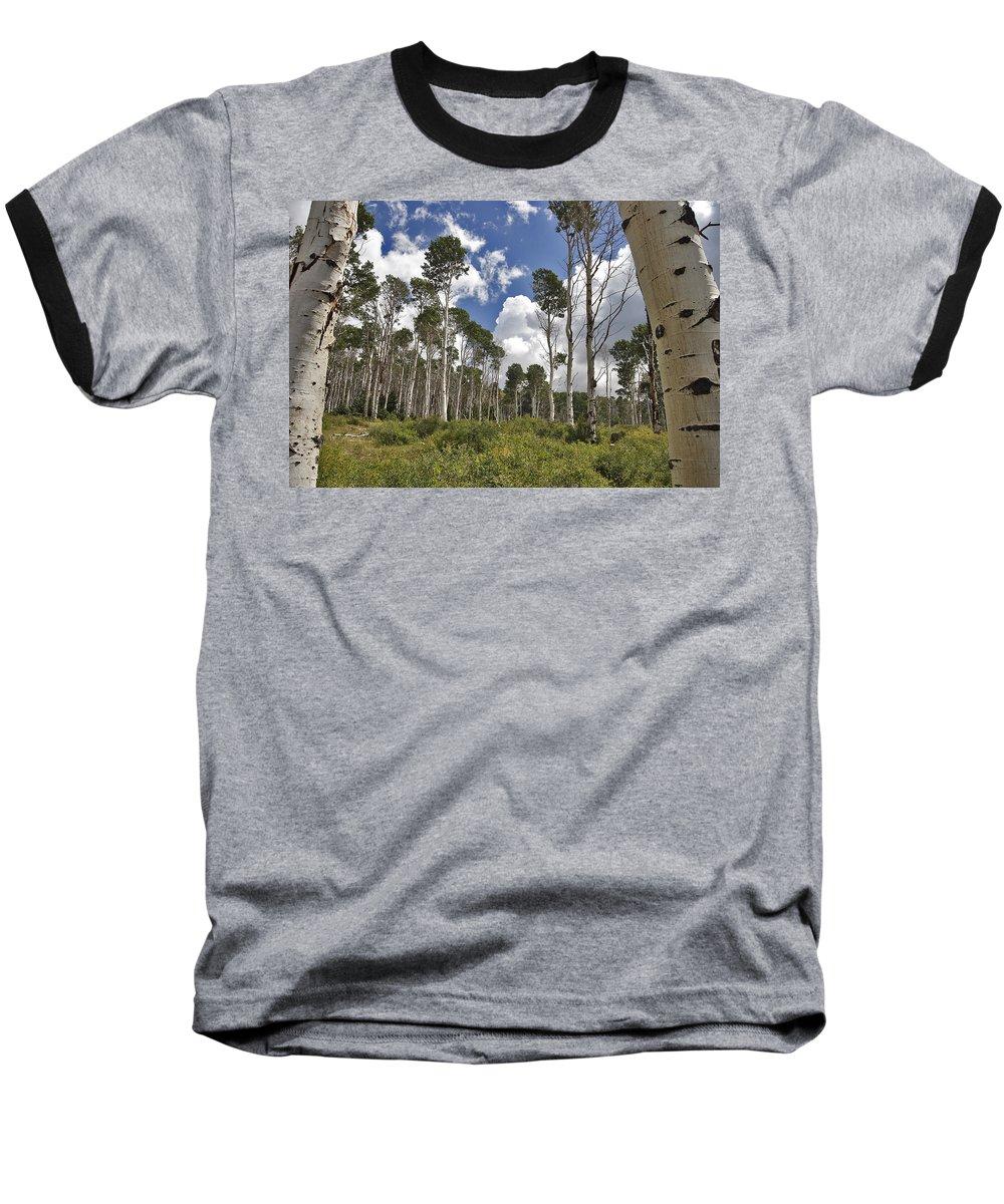 3scape Baseball T-Shirt featuring the photograph Aspen Grove by Adam Romanowicz