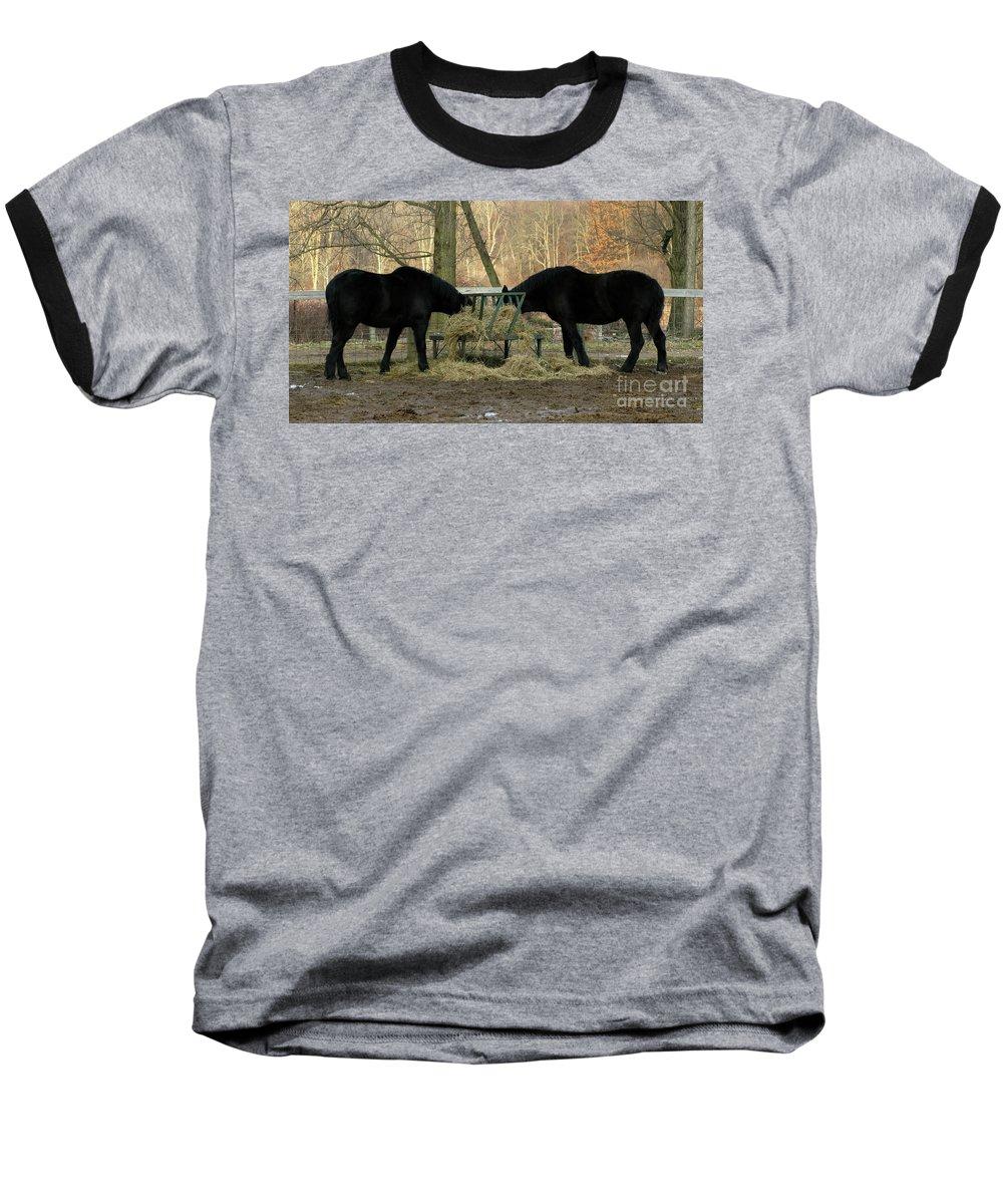 Horse Baseball T-Shirt featuring the photograph Barnyard Beauties by Ann Horn