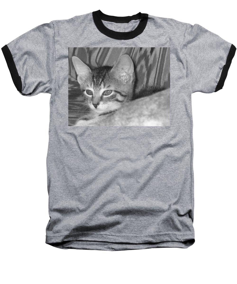 Kitten Baseball T-Shirt featuring the photograph Comfy Kitten by Pharris Art