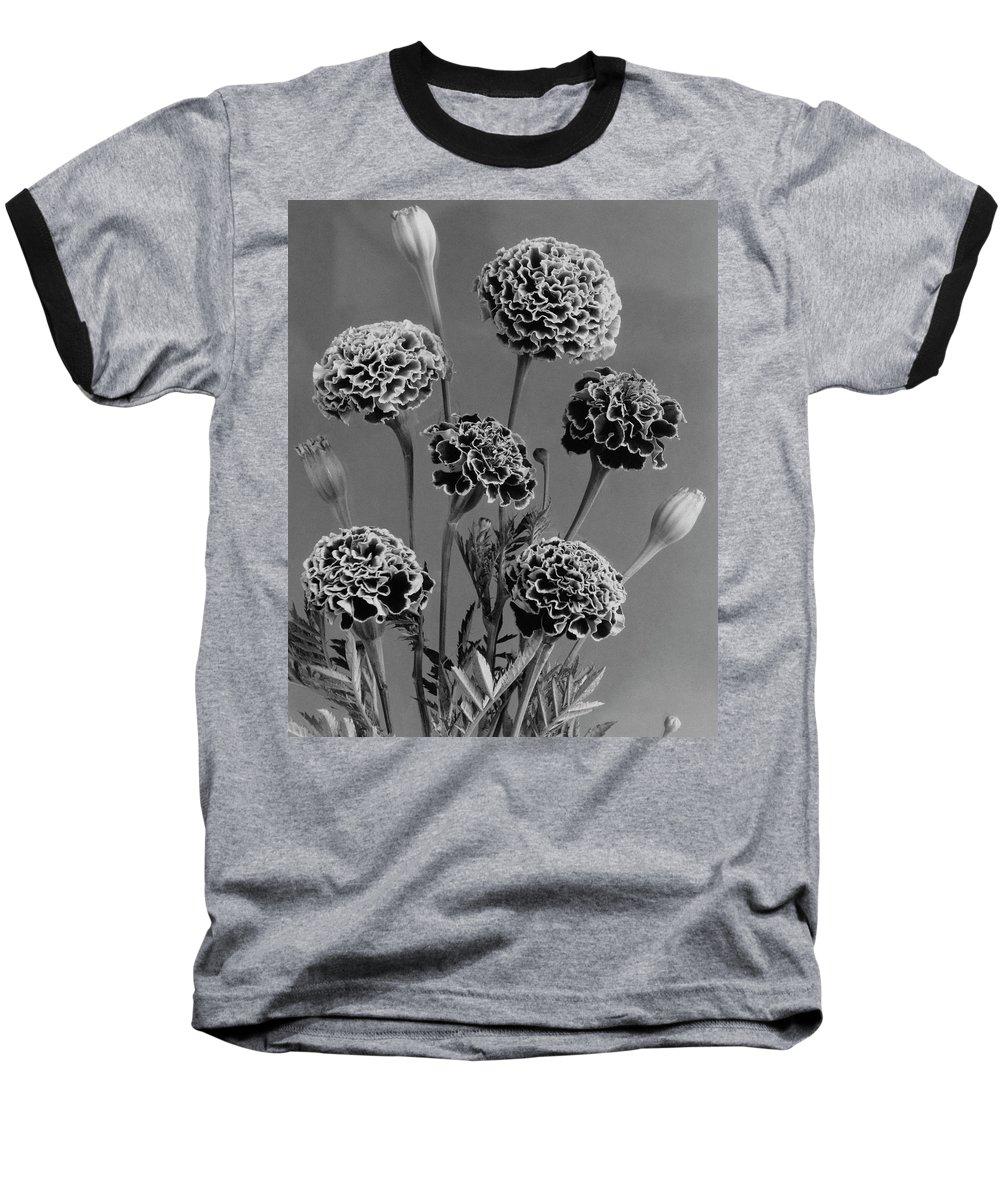 Flowers Baseball T-Shirt featuring the photograph Dwarf Monarch Marigolds by J. Horace McFarland