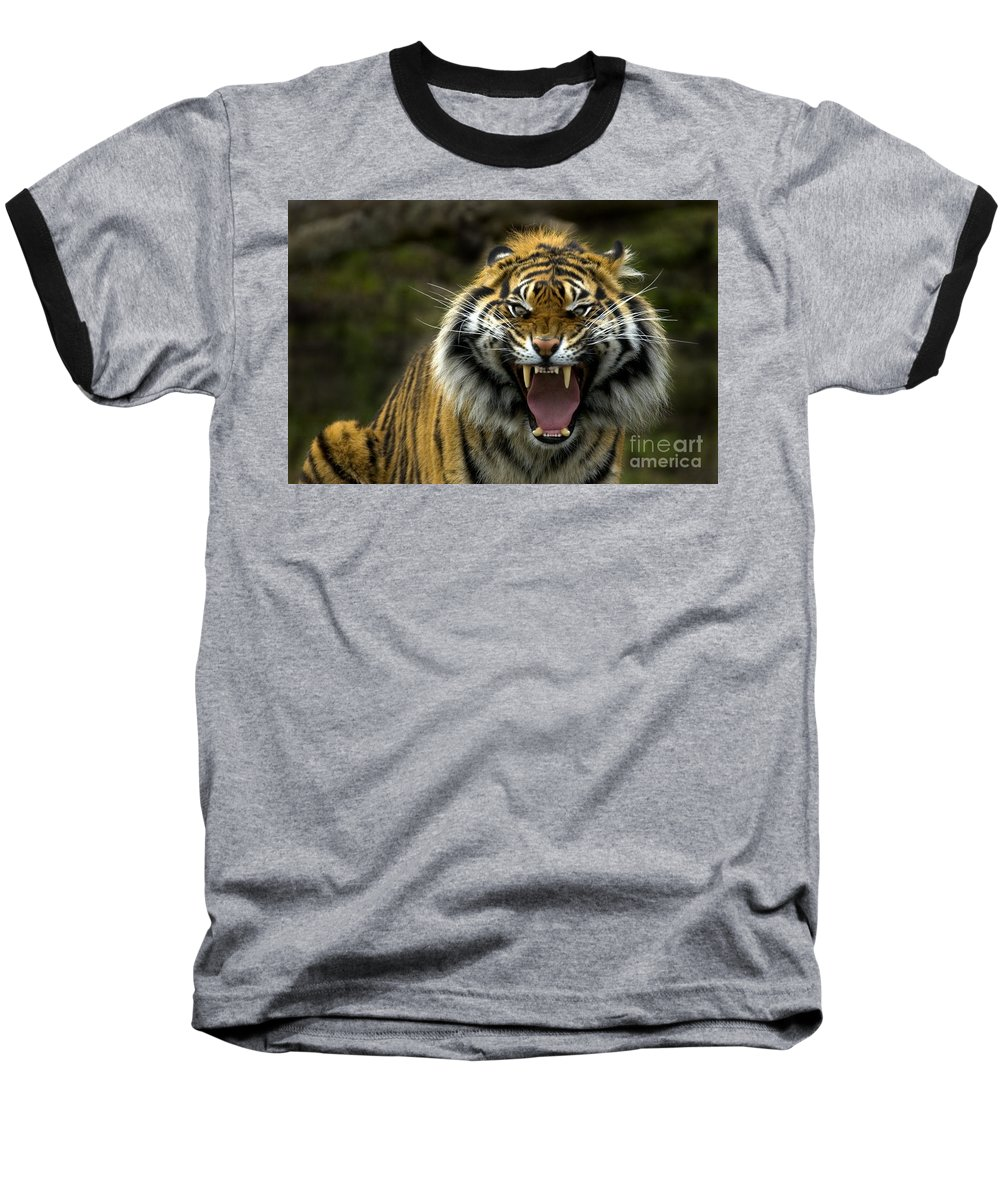 Tiger Baseball T-Shirt featuring the photograph Eyes Of The Tiger by Mike Dawson