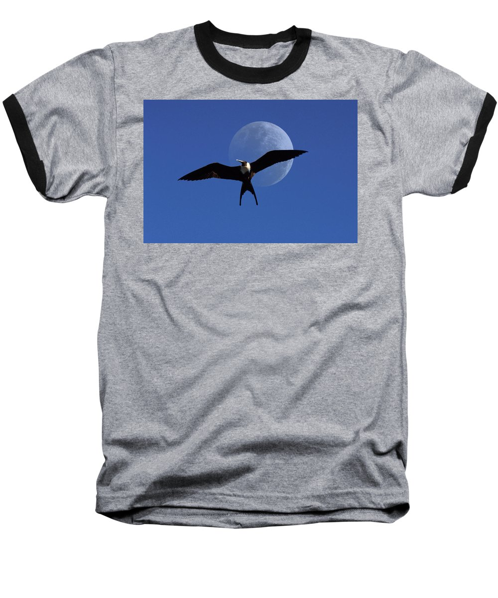 Frigate Baseball T-Shirt featuring the photograph Frigatebird Moon by Jerry McElroy