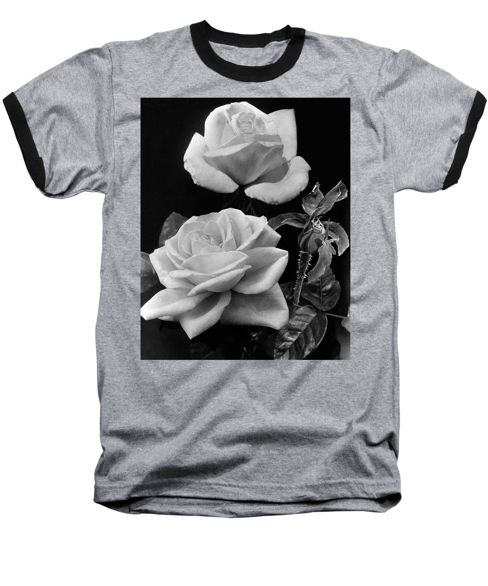 Flowers Baseball T-Shirt featuring the photograph 'george Arends' Roses by J. Horace McFarland