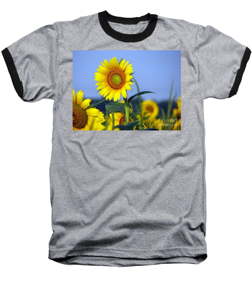 Sunflower Baseball T-Shirt featuring the photograph Getting To The Sun by Amanda Barcon