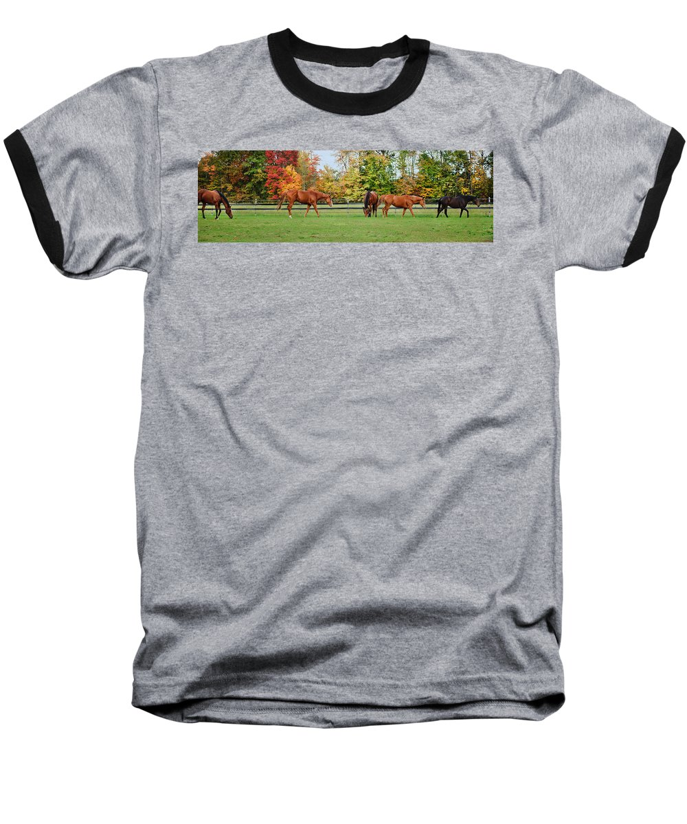 Equine Baseball T-Shirt featuring the photograph Group Activity by Kristi Swift