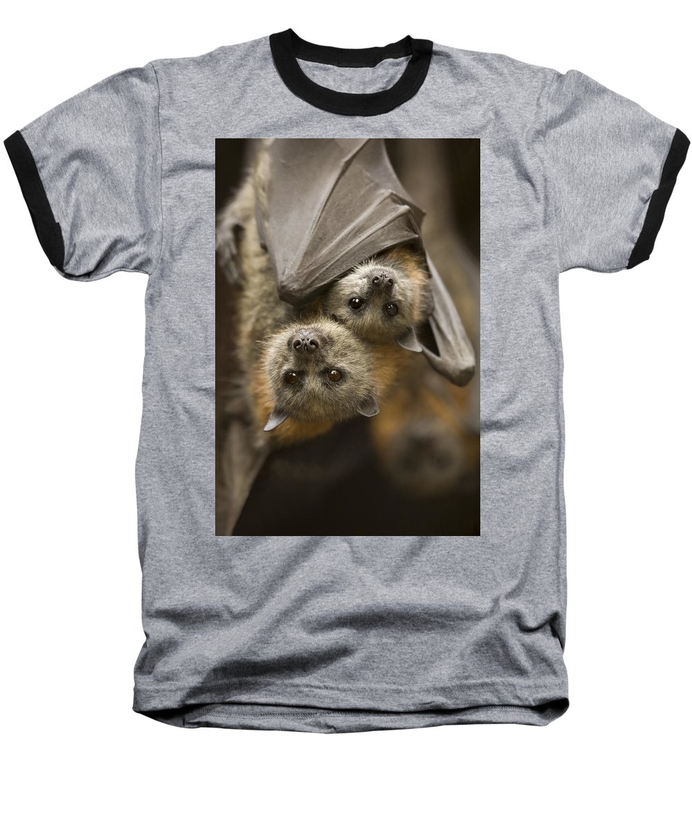 Bats Baseball T-Shirt featuring the photograph Hang In There by Mike Dawson
