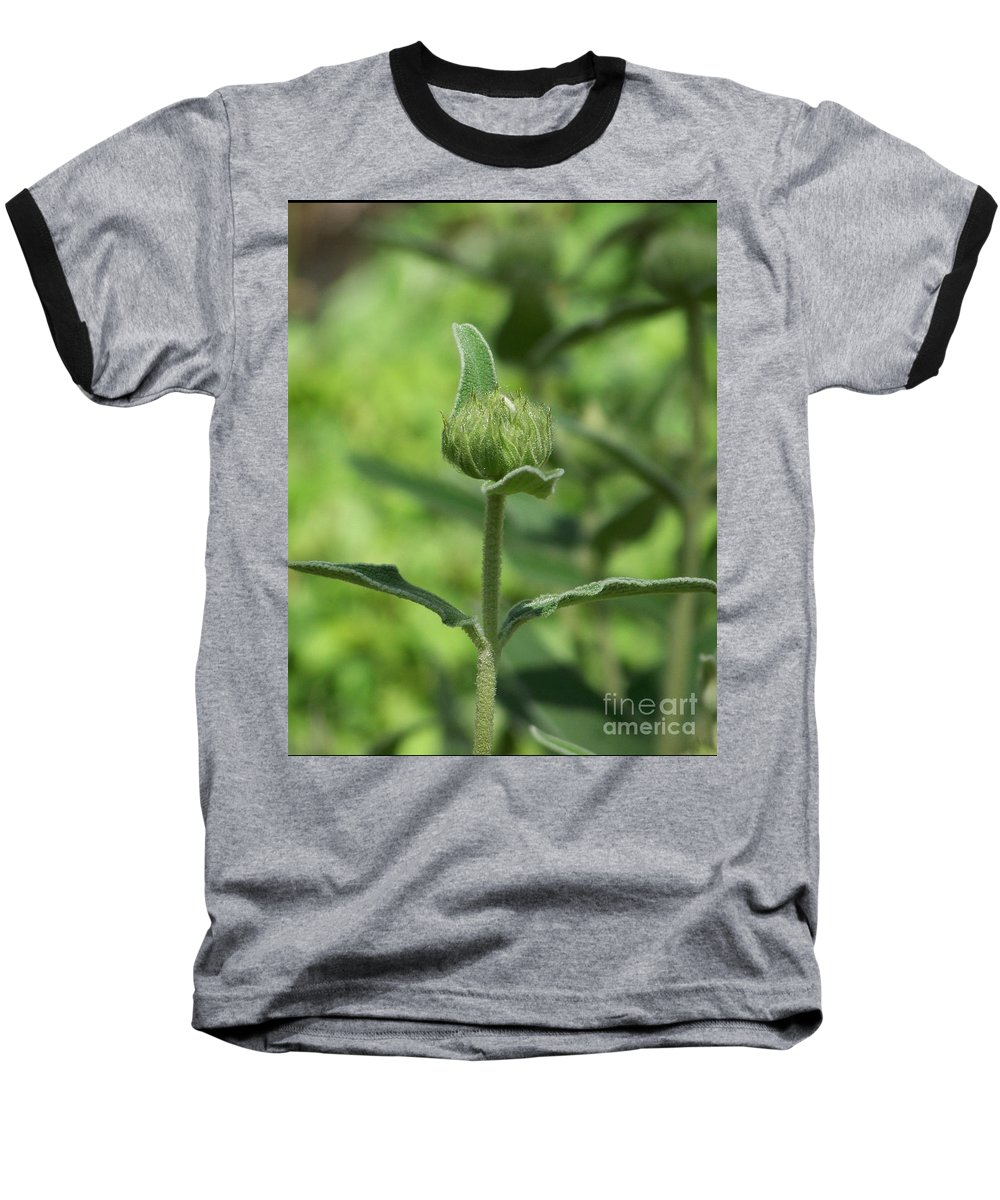 Plants Baseball T-Shirt featuring the photograph Its A Green World by Kathy McClure