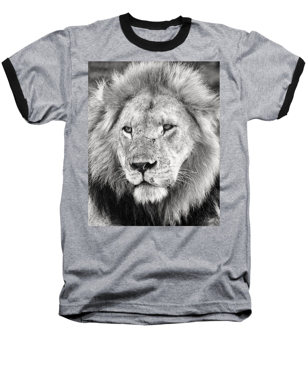 3scape Photos Baseball T-Shirt featuring the photograph Lion King by Adam Romanowicz