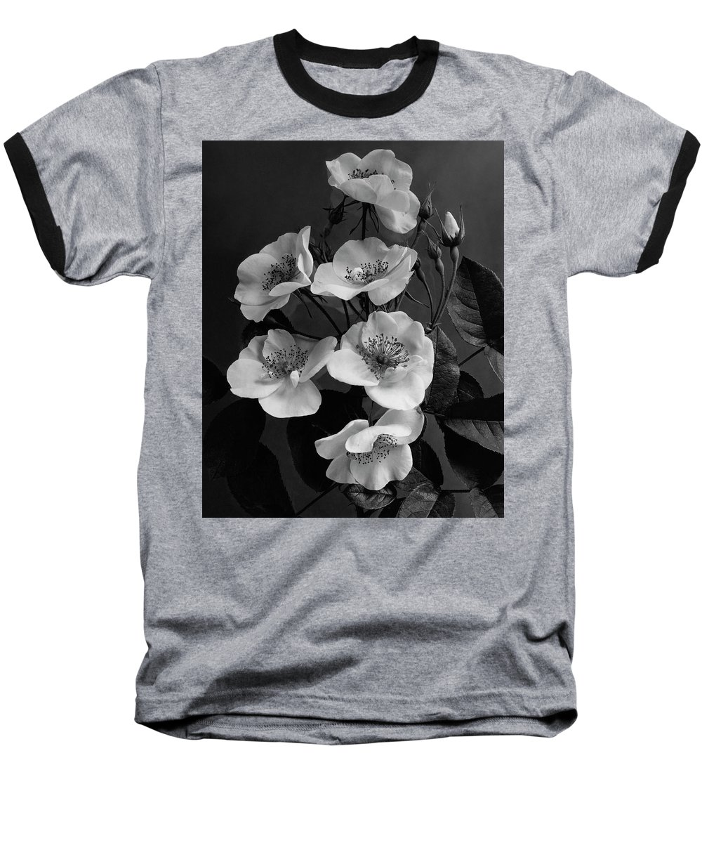 Flowers Baseball T-Shirt featuring the photograph Moschata Alba by J. Horace McFarland
