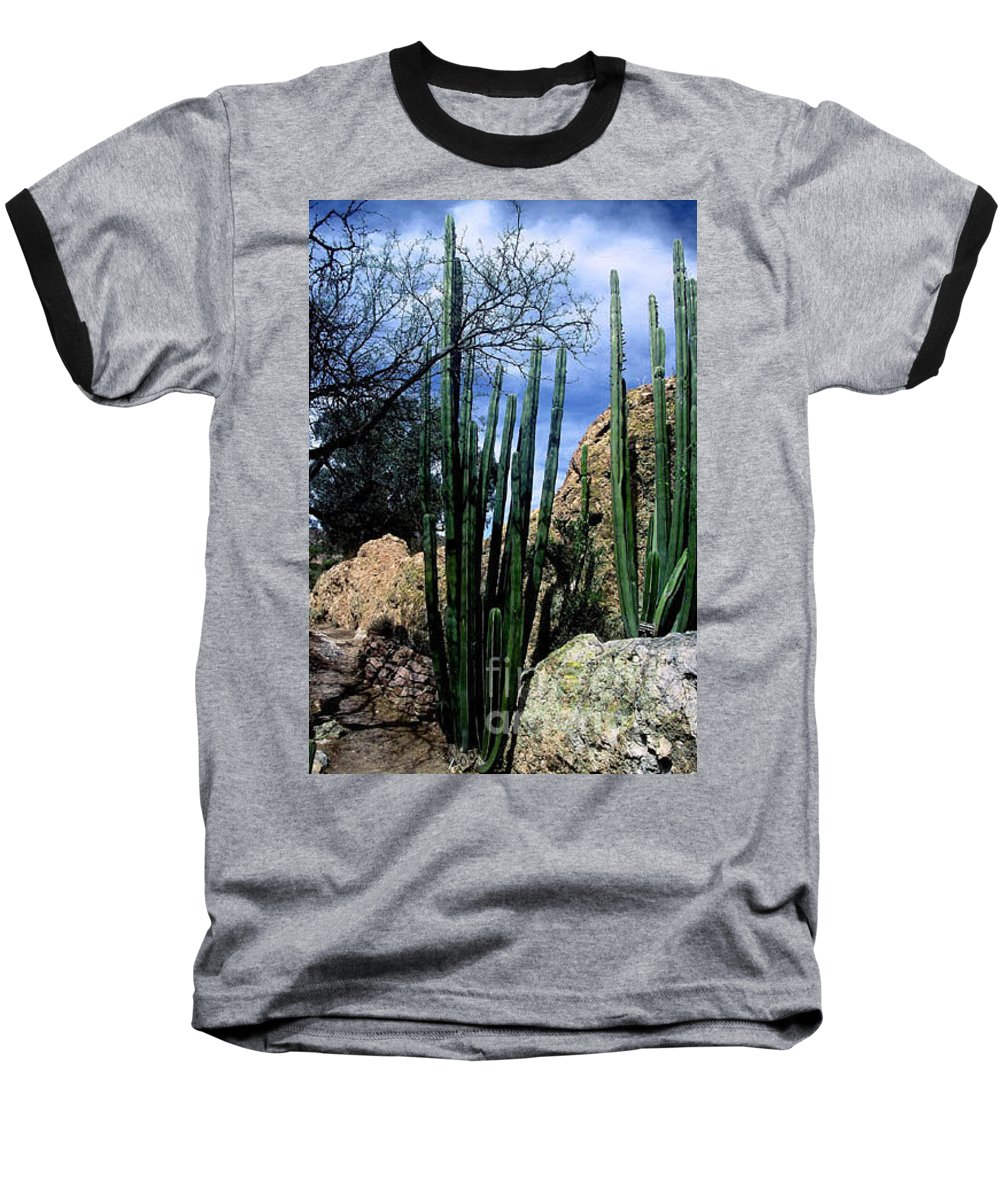 Cactus Baseball T-Shirt featuring the photograph Organ Pipe by Kathy McClure