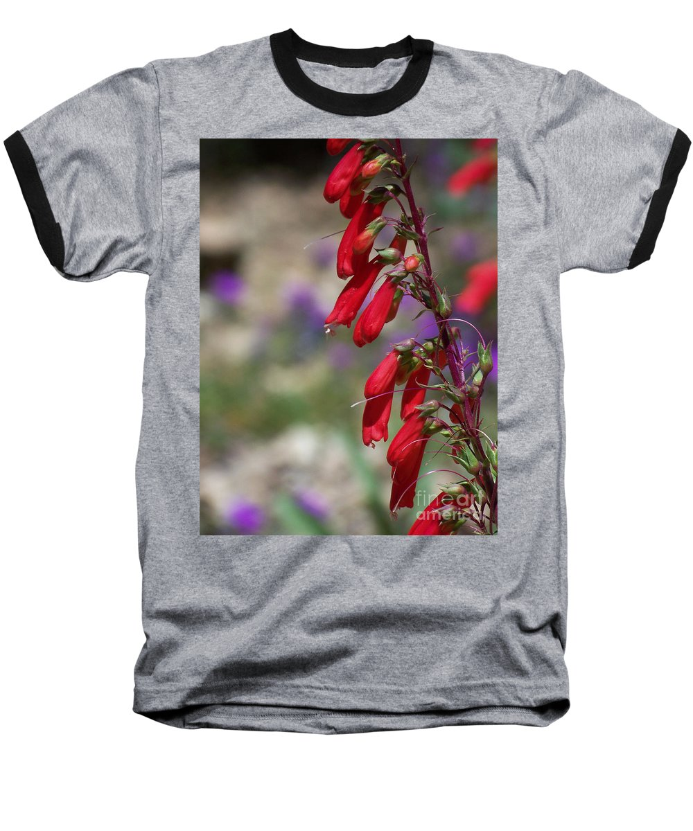 Flowers Baseball T-Shirt featuring the photograph Penstemon by Kathy McClure