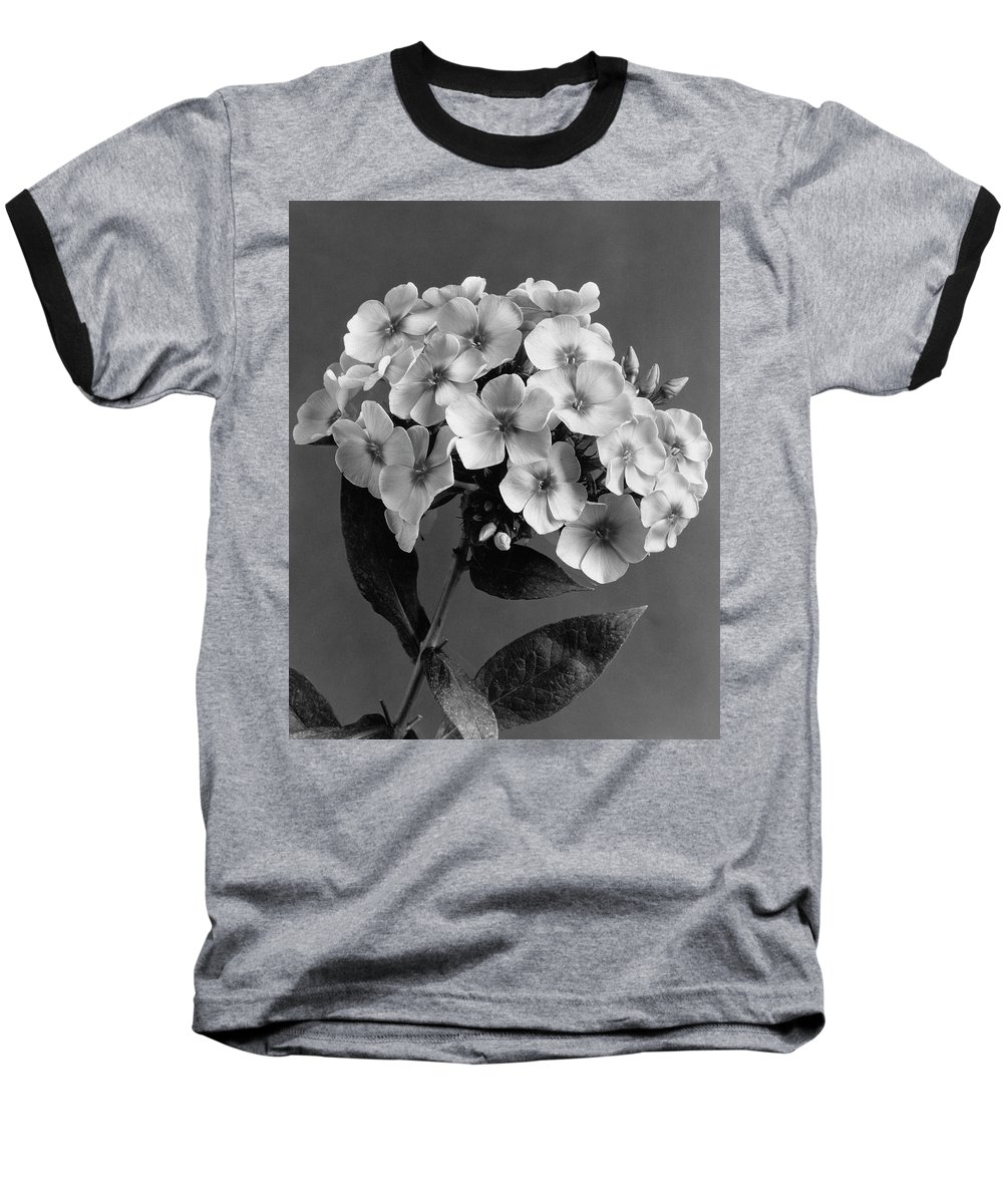 Flowers Baseball T-Shirt featuring the photograph Phlox Blossoms by J. Horace McFarland