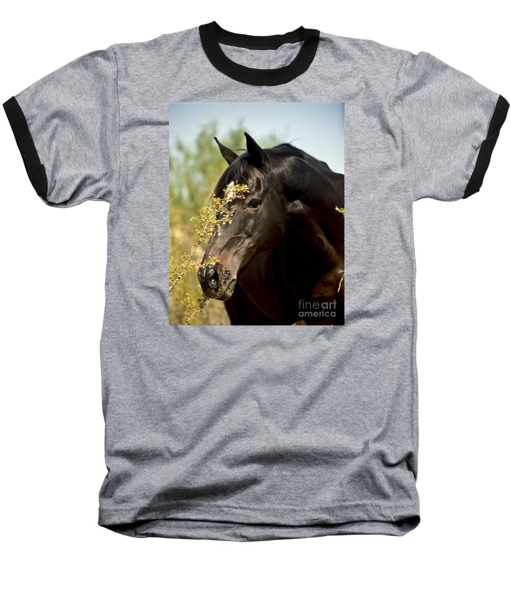 Horse Baseball T-Shirt featuring the photograph Portrait Of A Thoroughbred by Kathy McClure