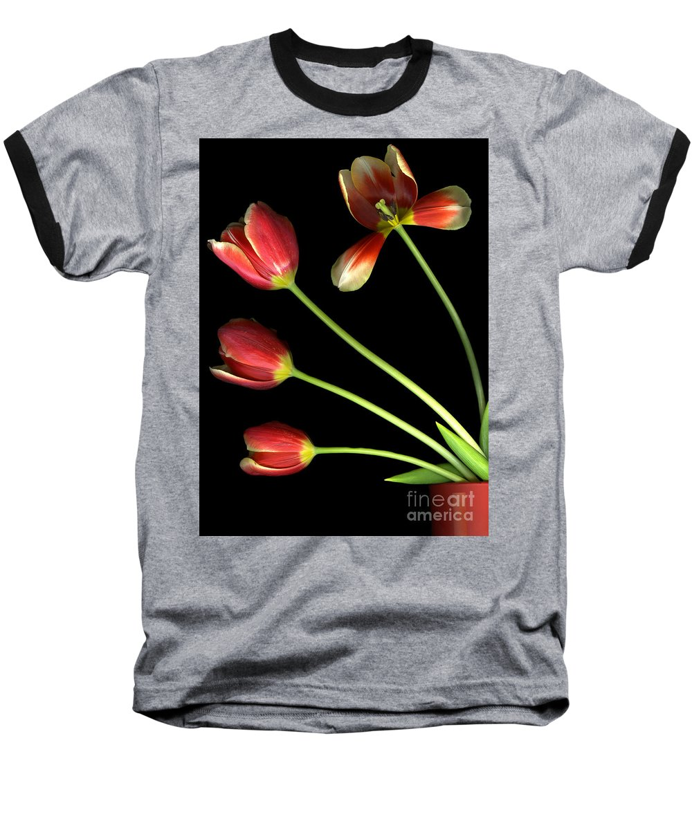 Scanography Baseball T-Shirt featuring the photograph Pot Of Tulips by Christian Slanec