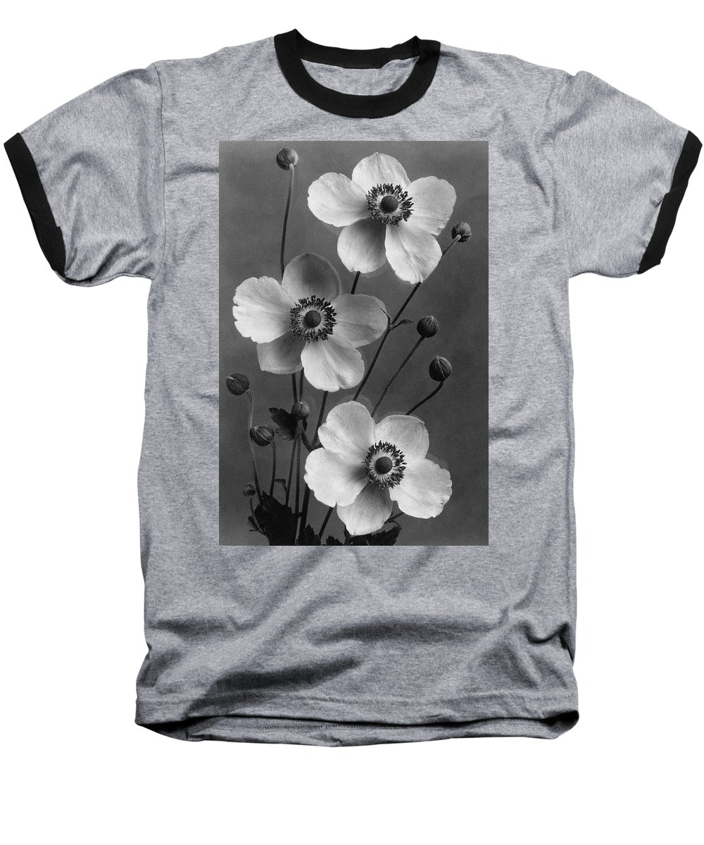 Flowers Baseball T-Shirt featuring the photograph September Charm Anemones by J. Horace McFarland