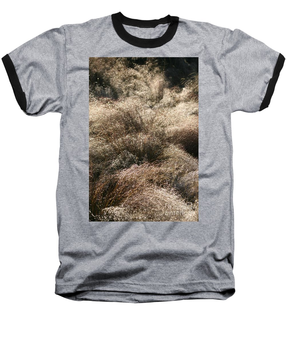 Grasses Baseball T-Shirt featuring the photograph Sparkling Grasses by Nadine Rippelmeyer