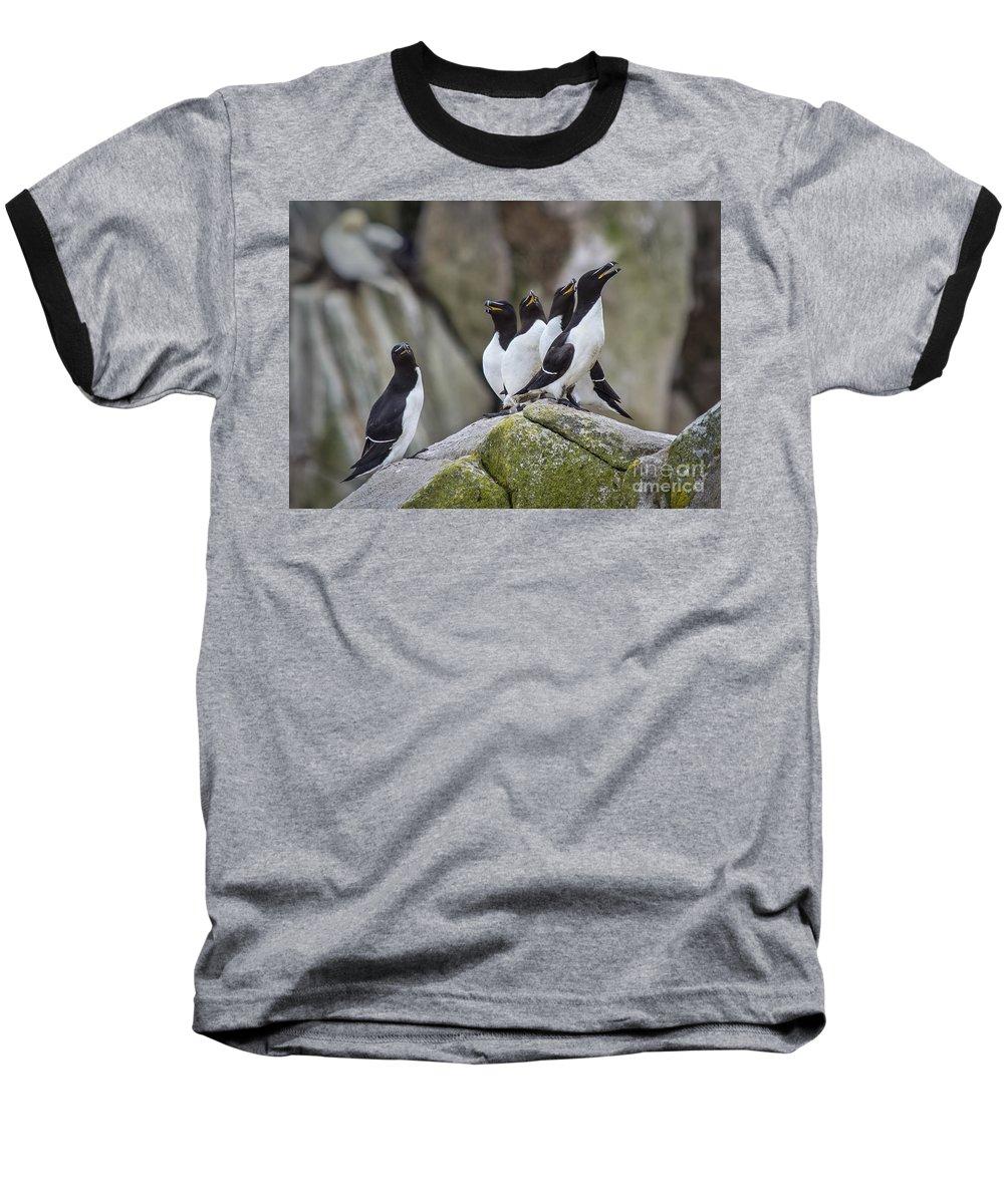 Razorbill Baseball T-Shirts