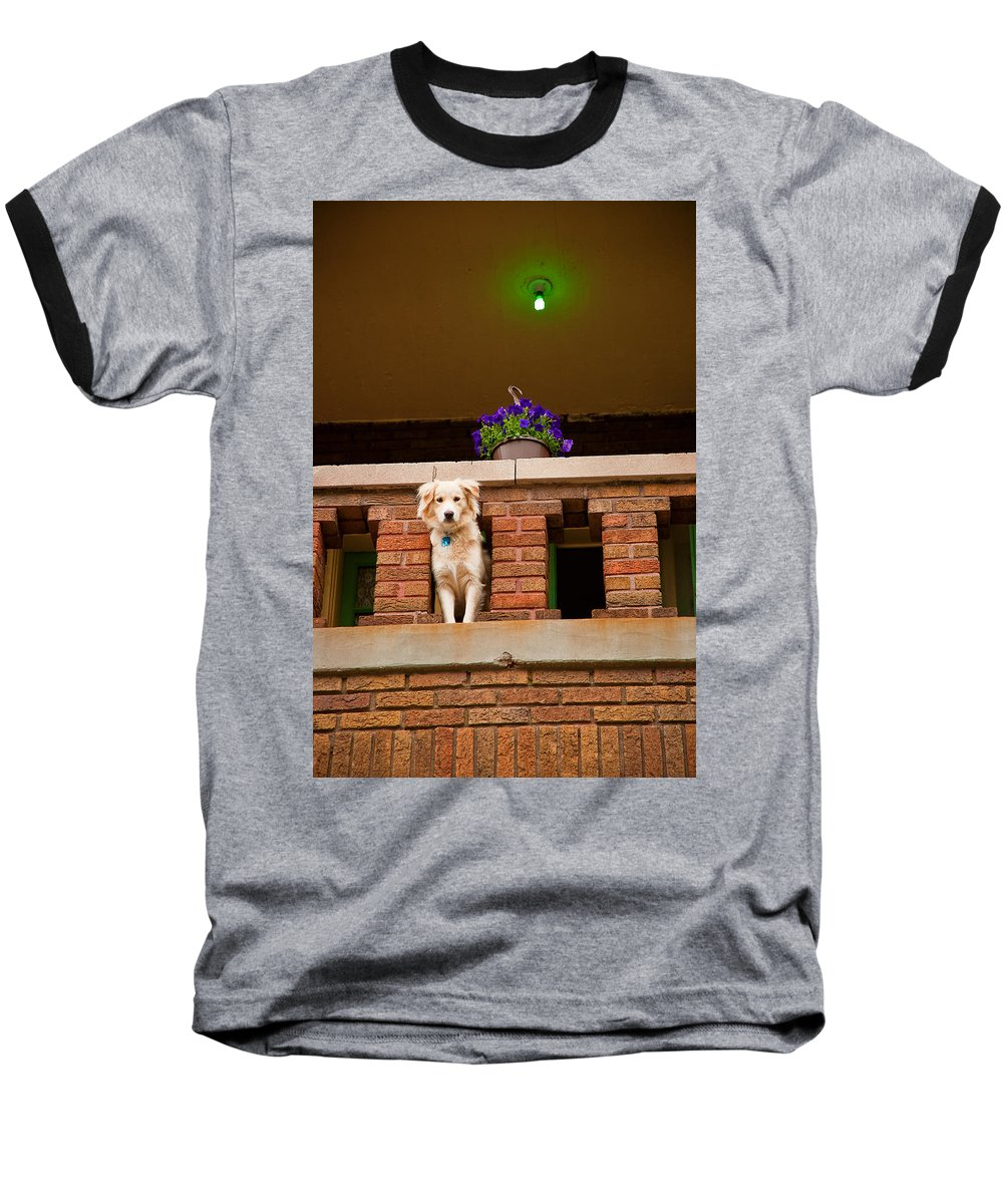 Dog Baseball T-Shirt featuring the photograph The Critic by Kristi Swift