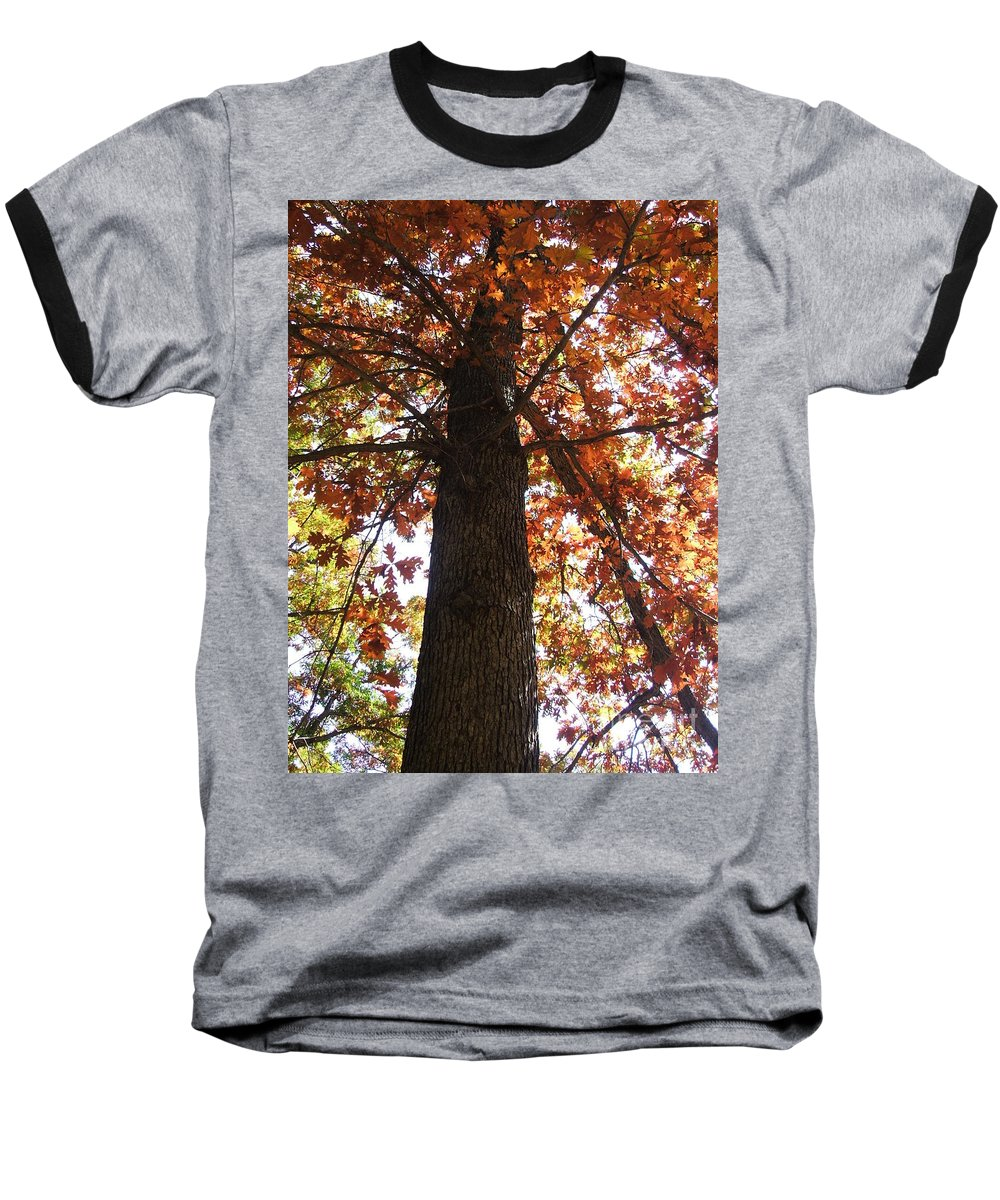 Tree Baseball T-Shirt featuring the photograph Up Fall by Minding My Visions by Adri and Ray