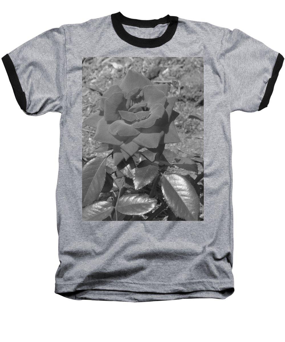 Rose Baseball T-Shirt featuring the photograph Velvet Rose by Pharris Art