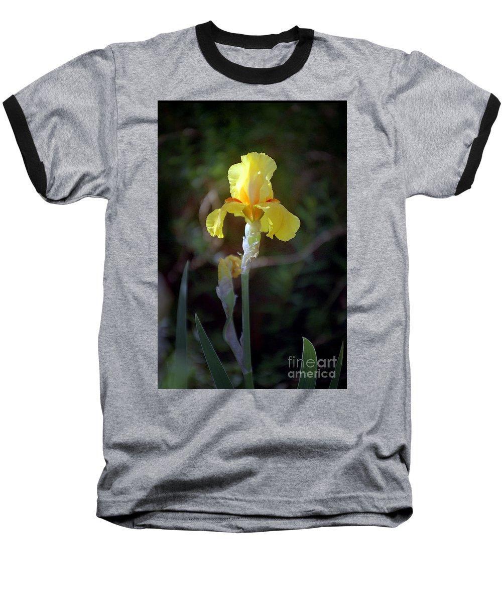Iris Baseball T-Shirt featuring the photograph Yellow Iris by Kathy McClure