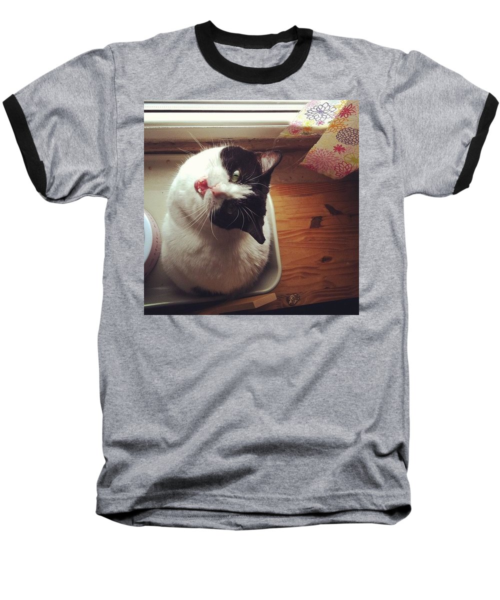 Catsofinstagram Baseball T-Shirt featuring the photograph the Bowl's Empty! #cat by Katie Cupcakes