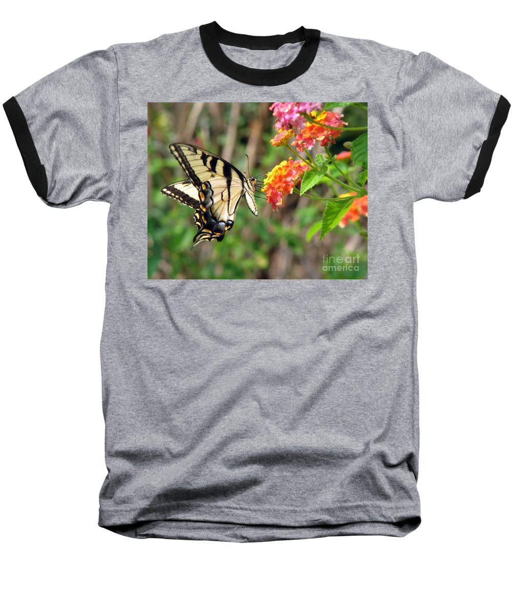 Butterfly Baseball T-Shirt featuring the photograph Butterfly by Amanda Barcon