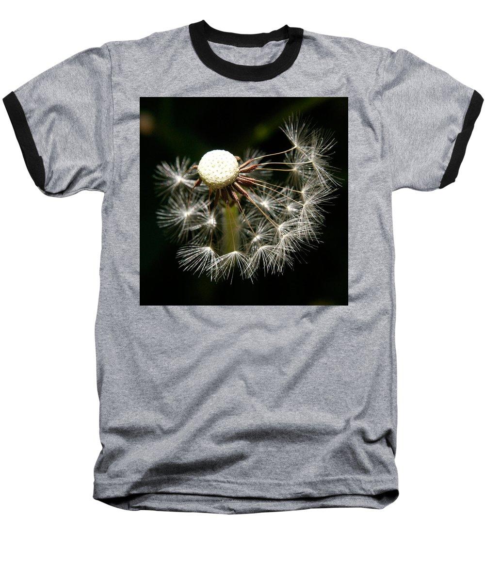 Dandelion Baseball T-Shirt featuring the photograph Dandelion by Ralph A Ledergerber-Photography