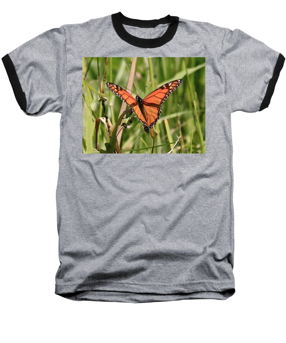 Butterfly Baseball T-Shirt featuring the photograph Drying My Wings by Robert Pearson