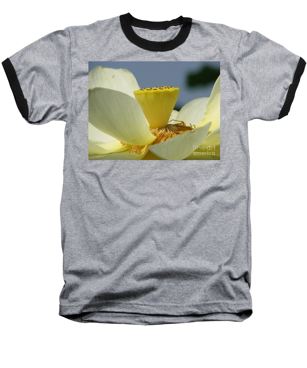 Lotus Baseball T-Shirt featuring the photograph Lotus by Amanda Barcon