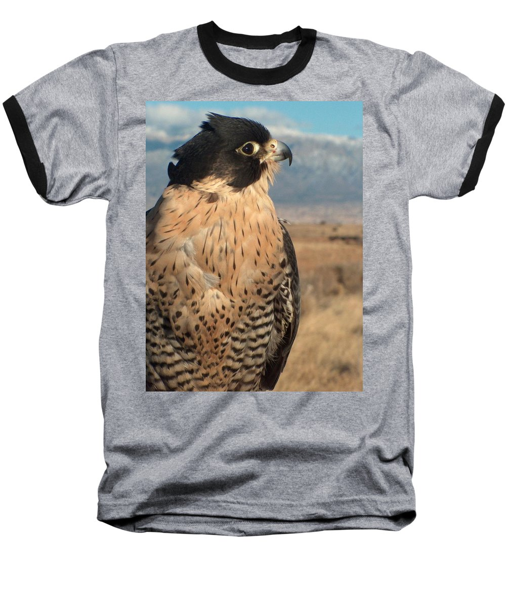Peregrine Falcon Baseball T-Shirt featuring the photograph Peregrine Falcon by Tim McCarthy