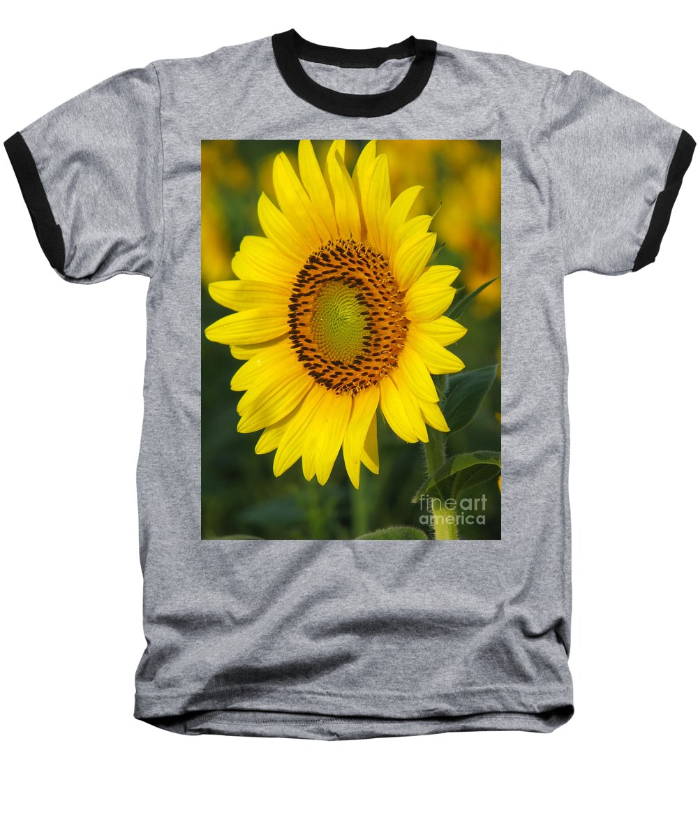 Sunflowers Baseball T-Shirt featuring the photograph Sunflower by Amanda Barcon