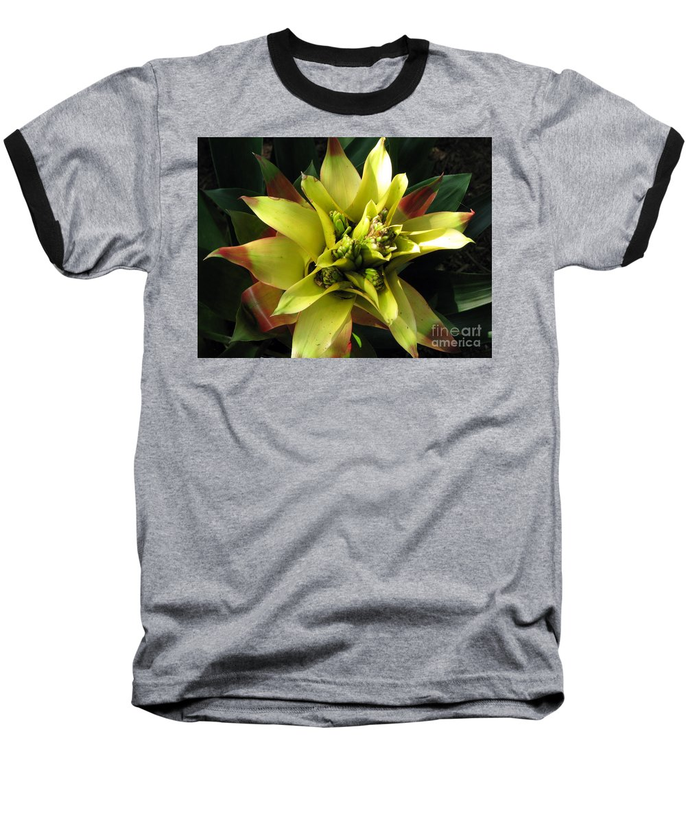Tropical Baseball T-Shirt featuring the photograph Tropical by Amanda Barcon