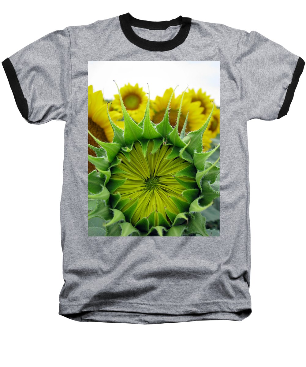 Sunflwoers Baseball T-Shirt featuring the photograph Sunflower Series by Amanda Barcon